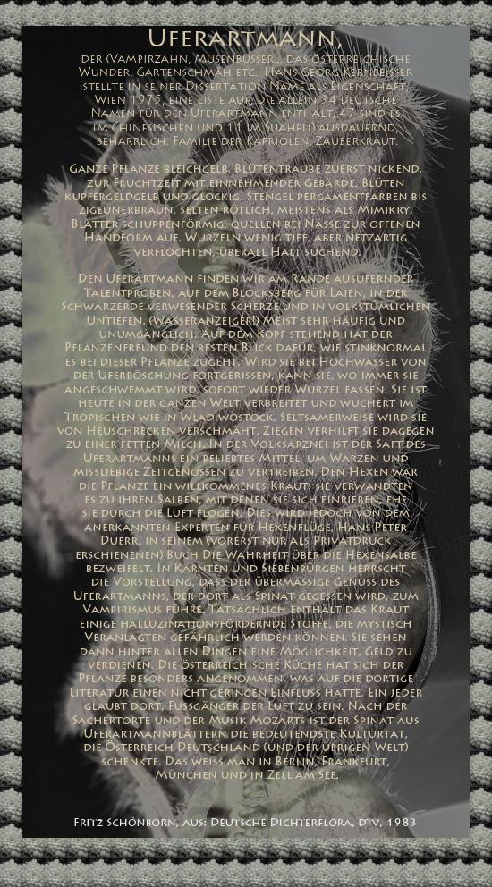 """Bild von Juliane Duda mit den Texten von Fritz Schönborn aus seiner Deutschen Dichterflora. Hier """"Uferartmann""""."""