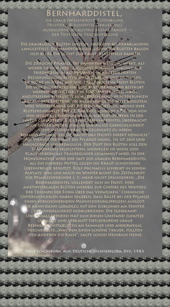 """Bild von Juliane Duda mit den Texten von Fritz Schönborn aus seiner Deutschen Dichterflora. Hier """"Bernharddistel""""."""