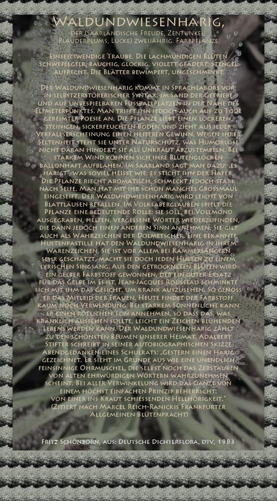 """Bild von Juliane Duda mit den Texten von Fritz Schönborn aus seiner Deutschen Dichterflora. Hier """"Waldundwiesenharig""""."""