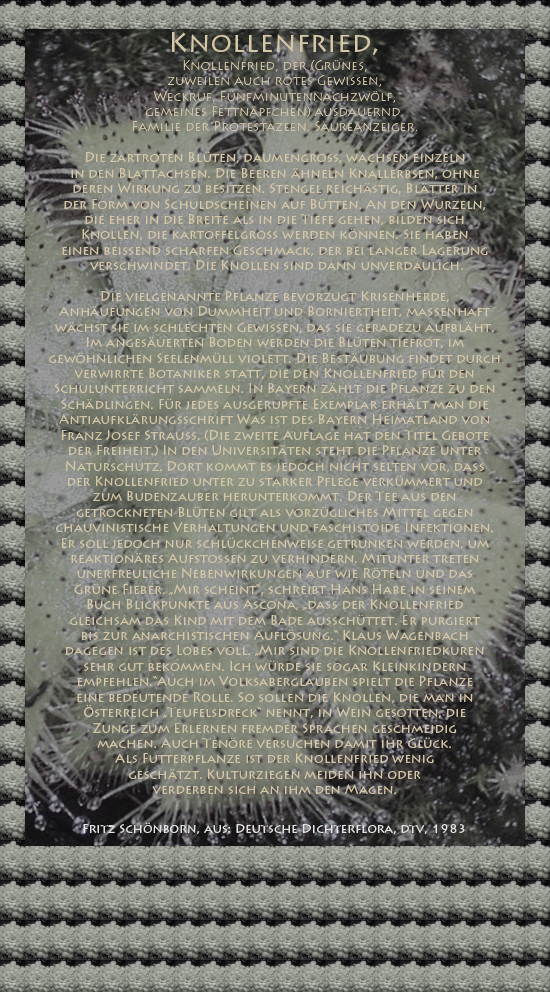 """Bild von Juliane Duda mit den Texten von Fritz Schönborn aus seiner Deutschen Dichterflora. Hier """"Knollenfried""""."""