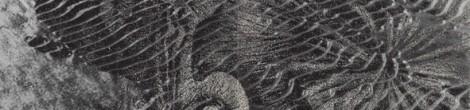 Hanns Cibulka: Poesiealbum 181