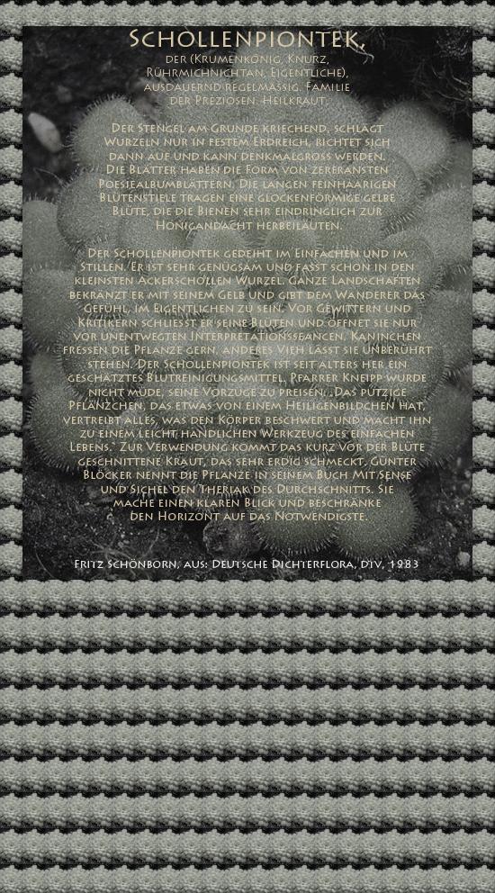 """Bild von Juliane Duda mit den Texten von Fritz Schönborn aus seiner Deutschen Dichterflora. Hier """"Schollenpiontek""""."""