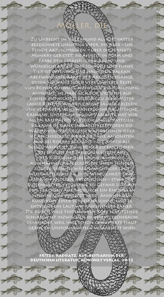 """Bild von Juliane Duda mit den Zeichnungen von Klaus Ensikat und den Texten von Fritz J. Raddatz aus seinem Bestiarium der deutschen Literatur. Hier """"Müller, die""""."""