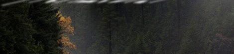 Klaus Hensel: Oktober Lichtspiel