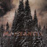 Peter Engstler: Manzanita