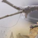 Mashup von Juliane Duda zum Buch von Andreas Altmann: wortebilden