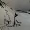 Bertolt Brecht: Poesiealbum 1