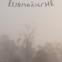 Zbigniew Herbert, Klaus Staemmler: Preis für Europäische Poesie 1997