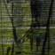 Dieter P. Meier-Lenz: hirnvogel