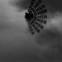 Aila Meriluoto: Poet's Corner 21