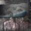 Gabriela Mistral: Poesiealbum 187