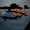 Christiane Schulz: Poesiealbum 307