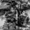 Tomas Tranströmer: Poesiealbum 298