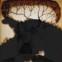 Salvatore Quasimodo: Gesammelte Gedichte