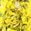 Jannis Ritsos: Das ungeheure Meisterwerk