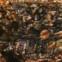 Elvío Romero: Poesiealbum 62