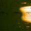 Boris Vian: Poesiealbum 233
