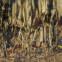 Derek Walcott: Der Traum auf dem Affenberg