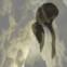 Peter Waterhouse: Kieselsteinplan. Für die unsichtbare Universität